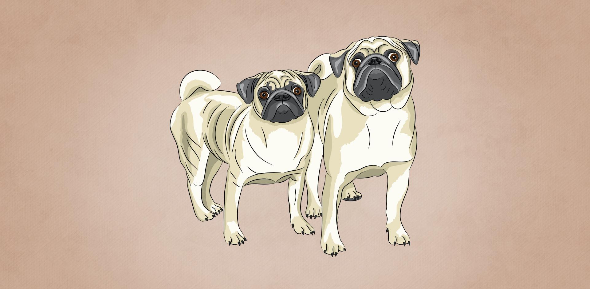 Câinele și cățelul